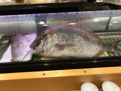 安芸灘漁師さん直送!天然真鯛!