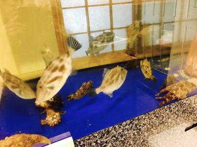 アコウ鯛、オコゼ、カワハギ・・・
