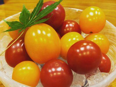 フォレストファーム弥栄のトマト♪