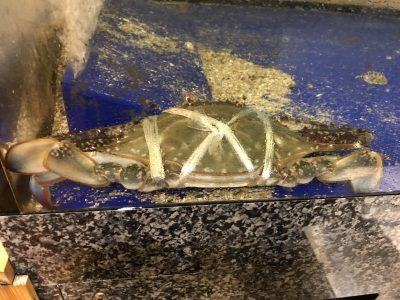 広島県産渡り蟹
